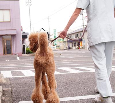 リードをつけた犬